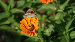Bluete Schmetterling Natur