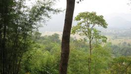 Wald Asien Vegetation